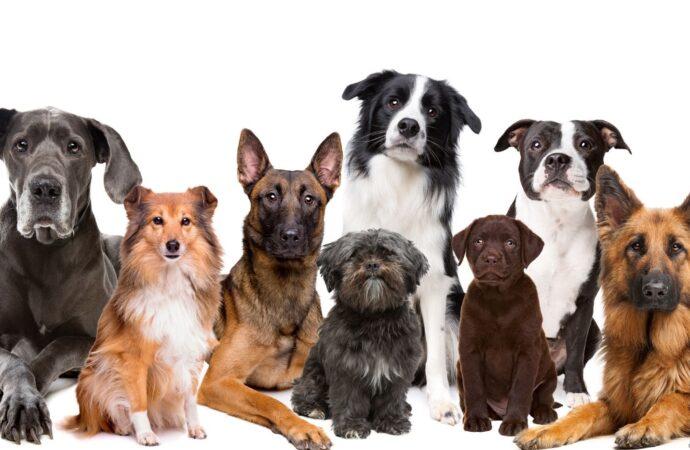 Wie das Unternehmen Sportdog eine Nische bei Hundezubehör besetzt